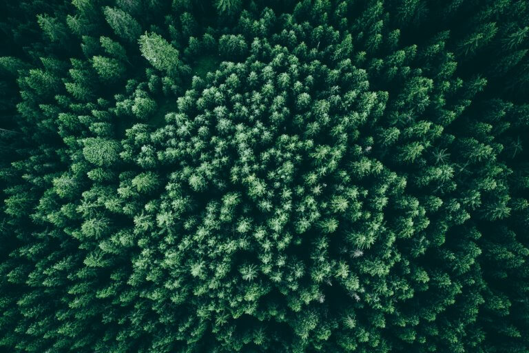 Trees or Forest, Which Do You See?